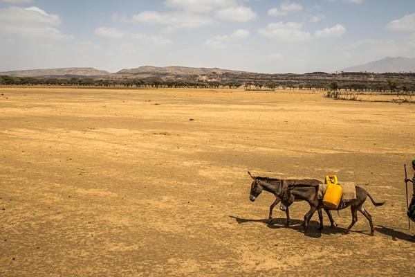 Woman crossing sand plain with donkey